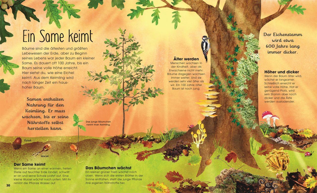 Baeume entdecke die verborgene Welt des Waldes1