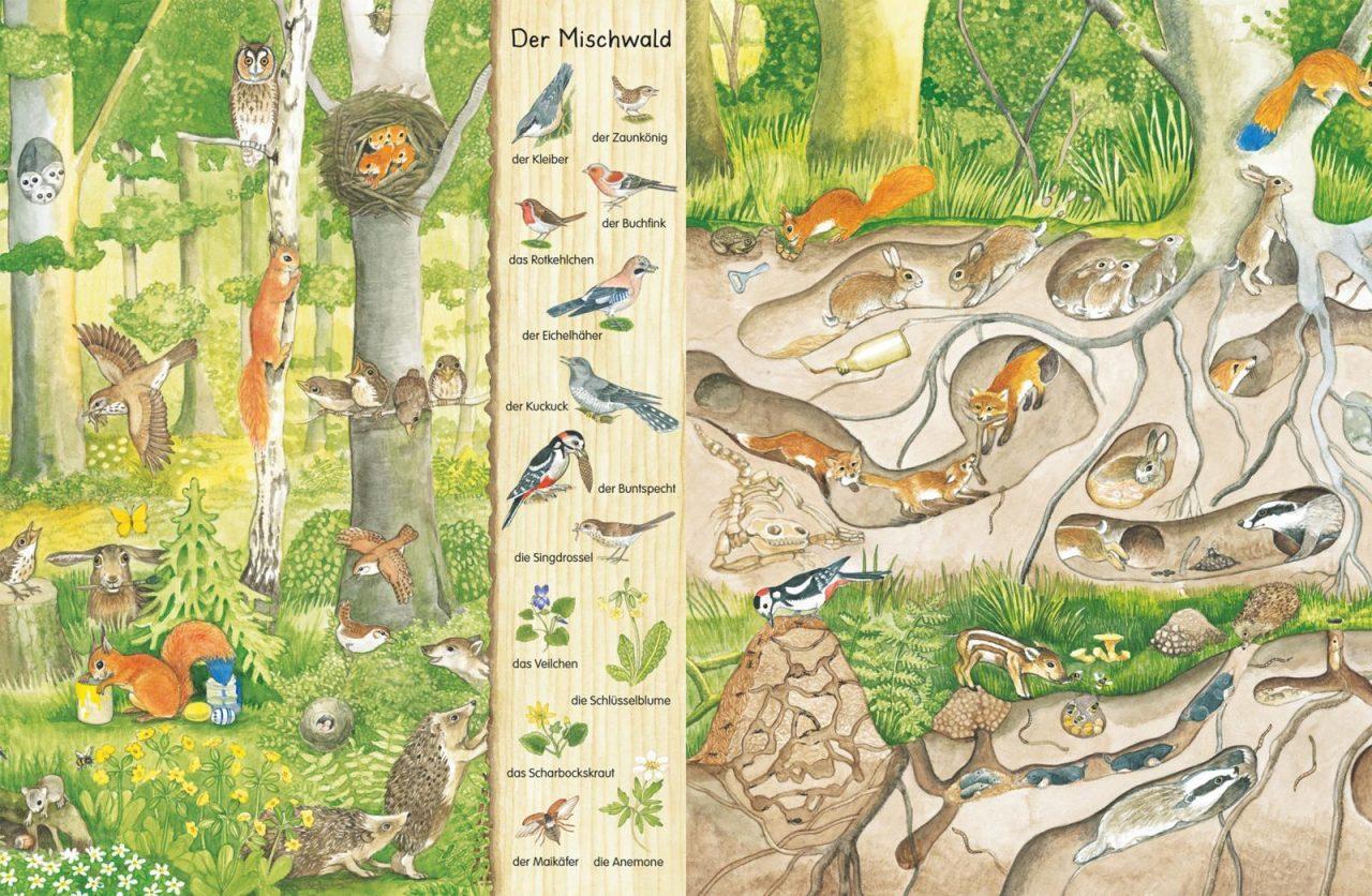 Mein erstes Wimmelbuch Im Wald1