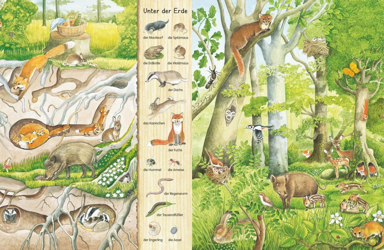 Mein erstes Wimmelbuch Im Wald2