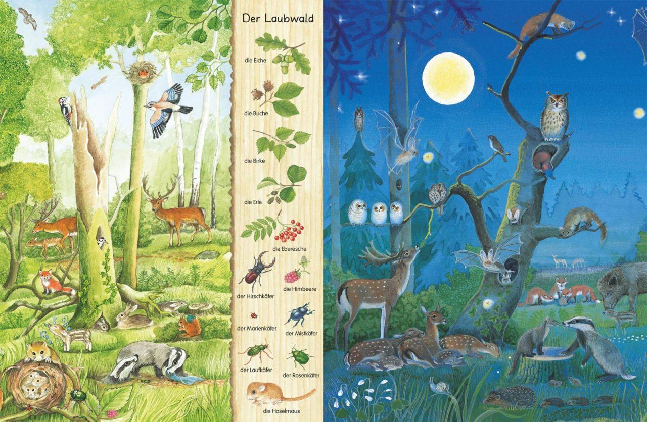 Mein erstes Wimmelbuch Im Wald3